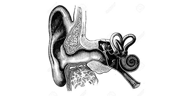 free hearing test hear me hamilton auckland